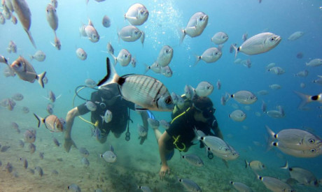 Package of 2 private Gold sea dives for certified divers (in the same day, incl full equipment)