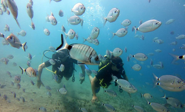 Package of 2 private Gold sea dives for certified divers (full equipment)