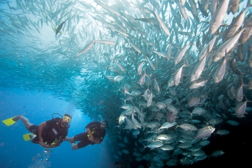 Private Gold sea dive for certified divers (full equipment)