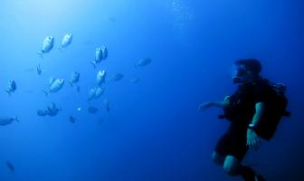 Keeping diving skills fresh